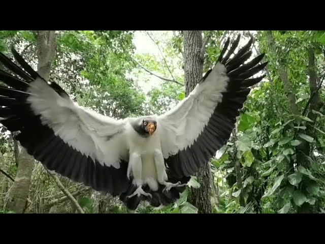 Huawei Mate 30 Pro – 7680fps Super Slow Motion – Preying Eagle