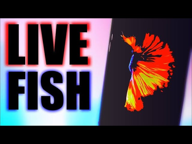How to install iphone 6s fish live wallpapers in ios 13 /12/11 without jailbreak .